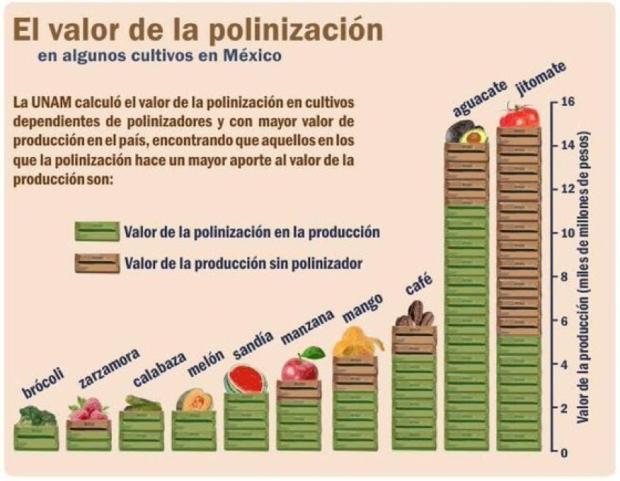 Polinizacion.png